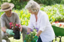 Gardening and dealing with joint pain