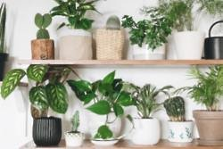Houseplant quiz