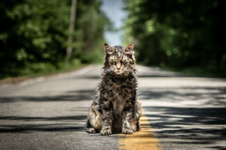 The Creed's beloved cat in Pet Sematary / Picture Credit: Di Bonaventura Pictures