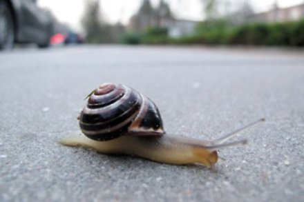 Japanese man visits UK for snail championships