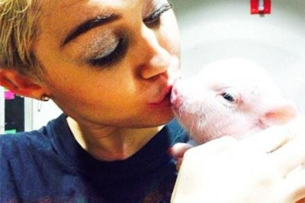 Miley Cyrus and her pet pig (c) Instagram