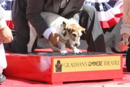 Uggie plants his paws in cement